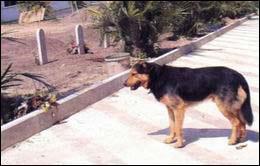 忠诚爱犬的感人故事--学佛网