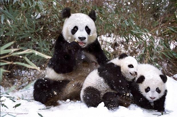 动物幸福的一家子