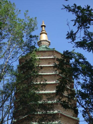 舍利塔全景 绿树即是宝树,佛塔即是宝塔,树林即是丛林.