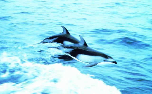 tips:世界最濒临灭绝的动物