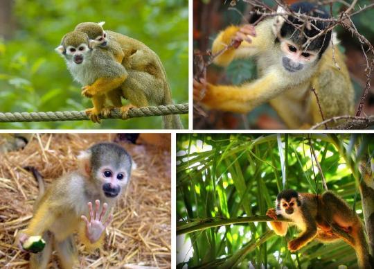 六种即将消失的灵长类动物