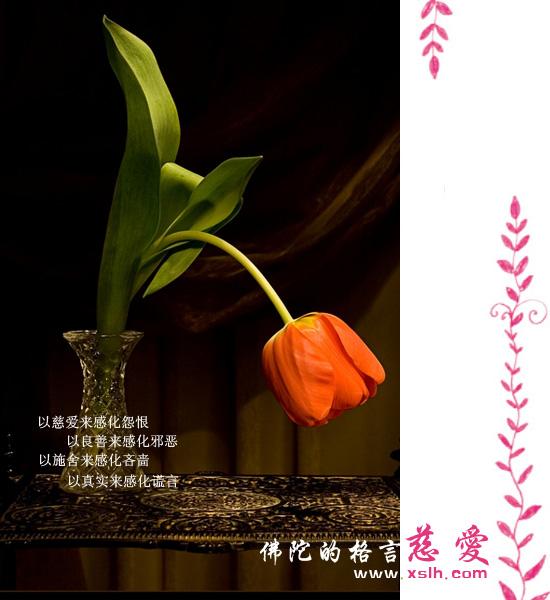 句句露禅机,字字流佛性:佛陀的醒世格言(学佛人必看) - 莲池佛地 - 莲池佛地