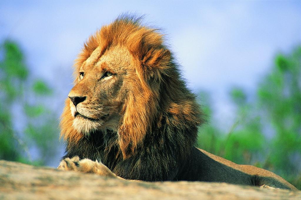 索达吉堪布:遇到违缘、烦恼要像狮子处在群兽中一样 - 郑恩丰 - 佛道·易学·人生交流空间