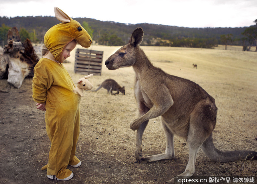 动物世界里的情和趣