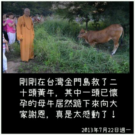 牛向僧人下跪谢恩(图) - wangqingwei421 - wangqingwei421的博客